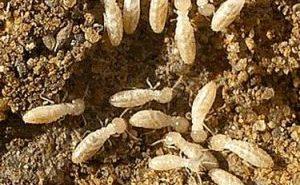 Termite Inspection Murfreesboro